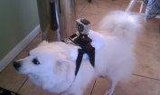 Pies z kamerą Gopro