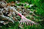 Ogród jesienią